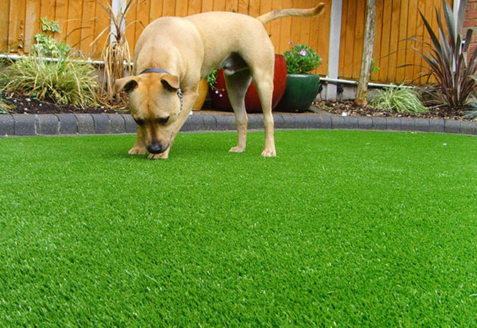 tuscan pet turf artificial grass