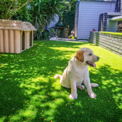 tuscan-turf-pet-friendly-grass